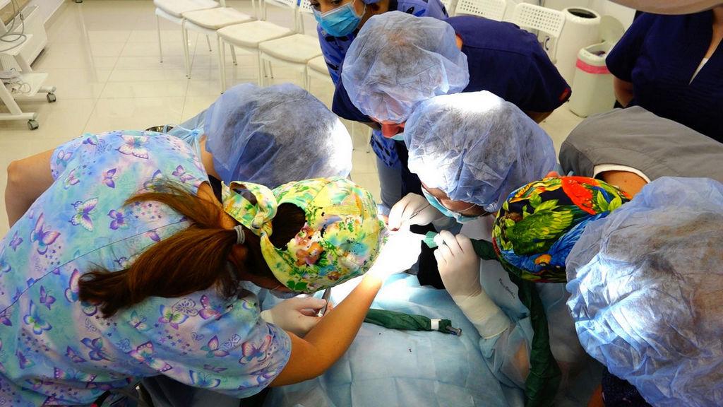 practiculum-implantologii-05-s3a-039